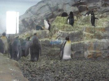 ペンギン群れ.jpg