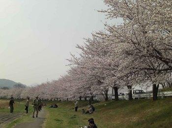 千本桜1.jpg