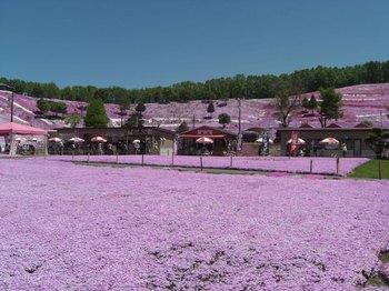 東藻琴芝桜公園全景.jpg