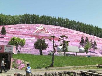 芝桜公園全景2.jpg
